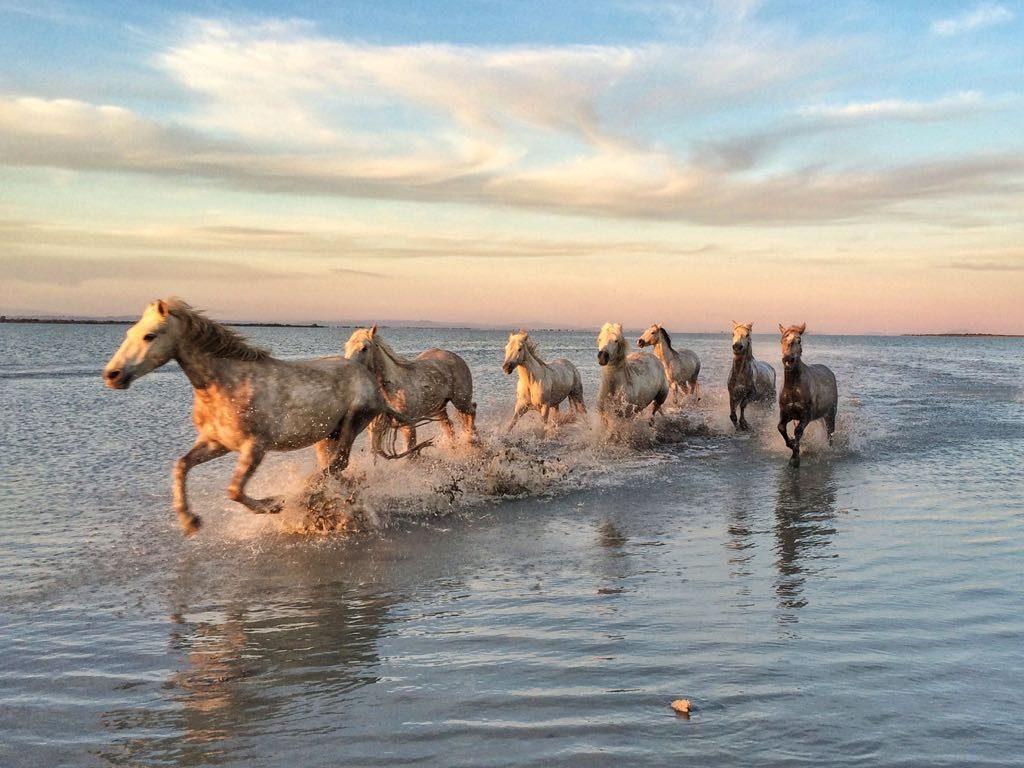 Dietro lo scatto: cavalli Camargue negli stagni: reflex e smartphone